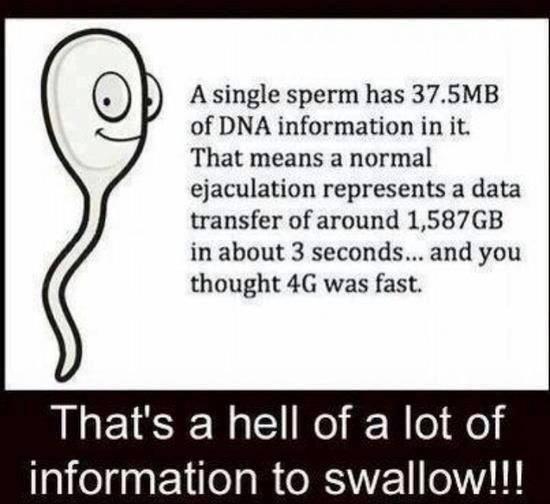 Sperm info